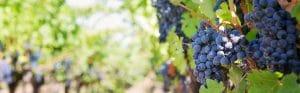 Cabinet de recrutement Bordeaux OpenSourcing